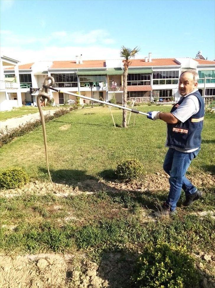 Edirne'de girdiği süs havuzundan çıkarılan yılan, doğaya bırakıldı