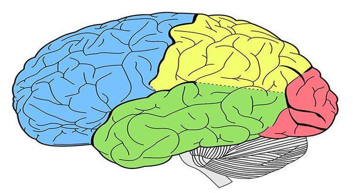 Beyin Kanseri : Nedenleri, Belirtileri, Tedavisi