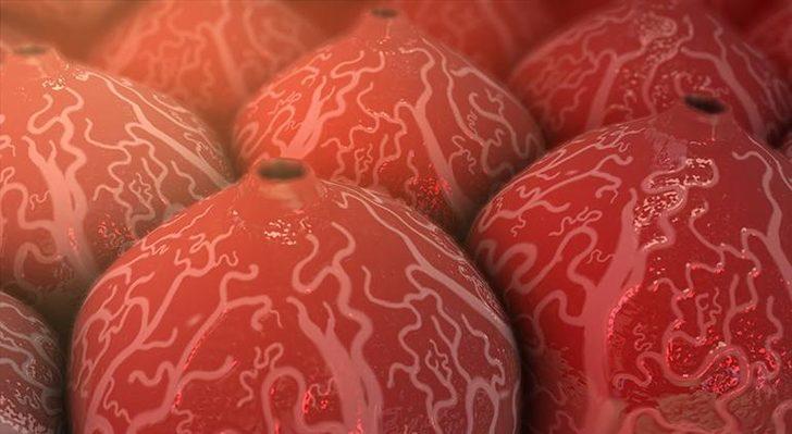 Hepatit C : Nedenleri, Belirtileri, Tedavisi