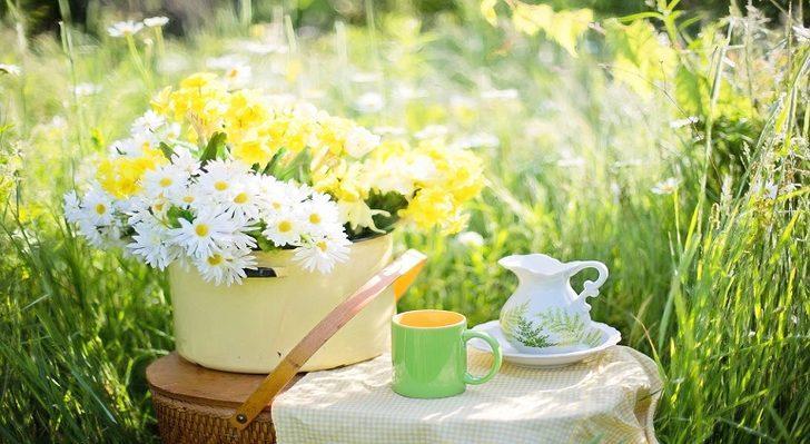 Form çayı: Faydaları nelerdir, nasıl hazırlanır?