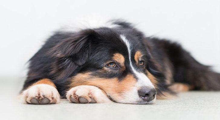 Rüyada Köpek Görmek: Bir Sürü Köpek, Havlayan Köpek, Büyük Köpek