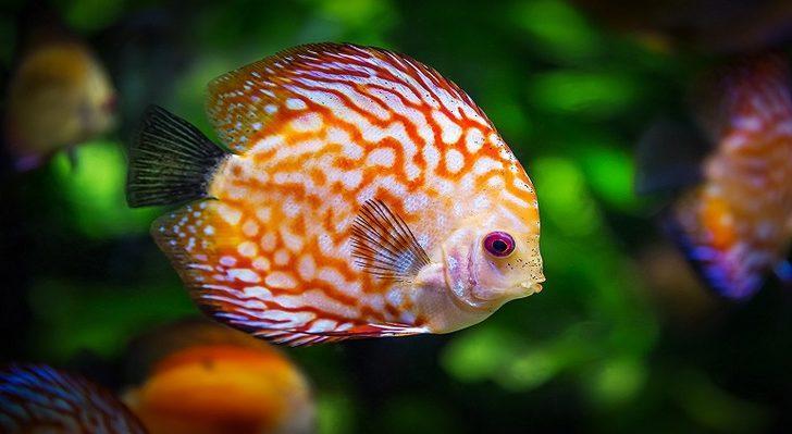 Rüyada balık görmek: Büyük balık, denizde balık, canlı balık
