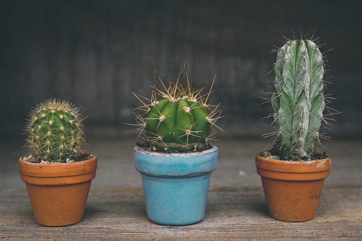 Bu bitkilere odanızda mutlaka yer verin! Fazla radyasyona maruz kalmamak için...