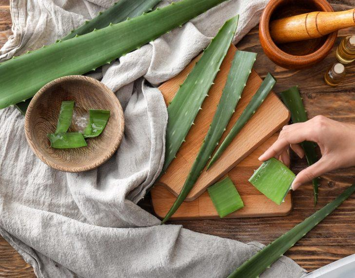 Aloe vera bakımı nasıl yapılır, nasıl çoğaltılır, neden sararır?