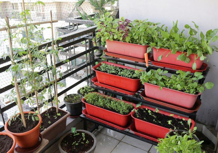 Adeta minik bir sera: Balkonda sebze yetiştirmenin püf noktaları