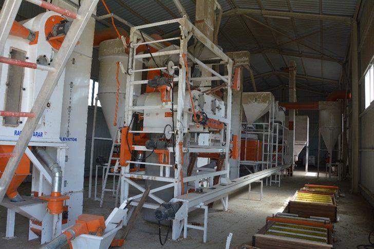 Akyurt'ta tohum eleme tesisi sezona hazır