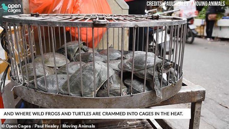 Hayvan pazarında ortaya çıkan görüntüler şoke etti