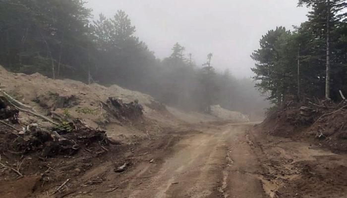 Uludağ'da 1500'e yakın ağaç kesildi! Doğaseverlerden tepki thumbnail