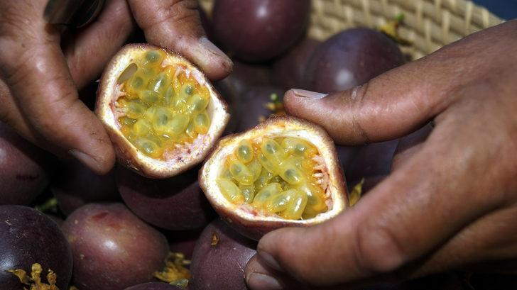 Hobi amaçlı başladı! Passiflora meyvelerini 100 liradan satıyor