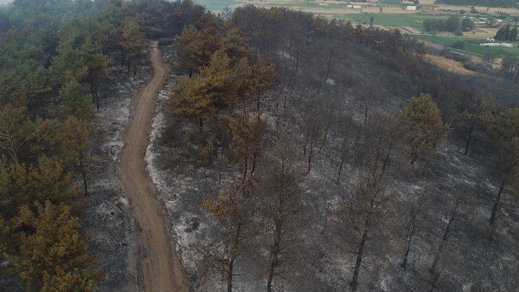 Çanakkale Gelibolu'daki orman yangınında son dakika gelişmeleri!