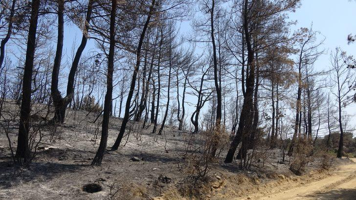 Gelibolu'yu yangından sonra ikinci tehlike bekliyor