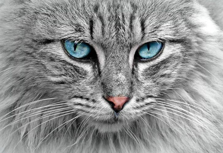 Rüyada kedi görmek ne anlama gelir? İşte rüyada çeşitli şekil kedi görmenin tabirleri