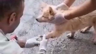 Asfalta yapıştı! Yavru köpeği böyle kurtardılar