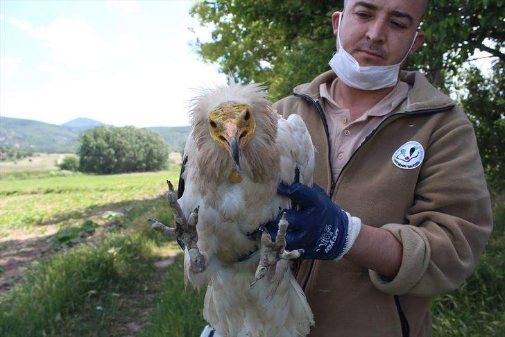 Bulgaristan'dan Eskişehir Hayvanat Bahçesi çalışanlarına teşekkür mektubu