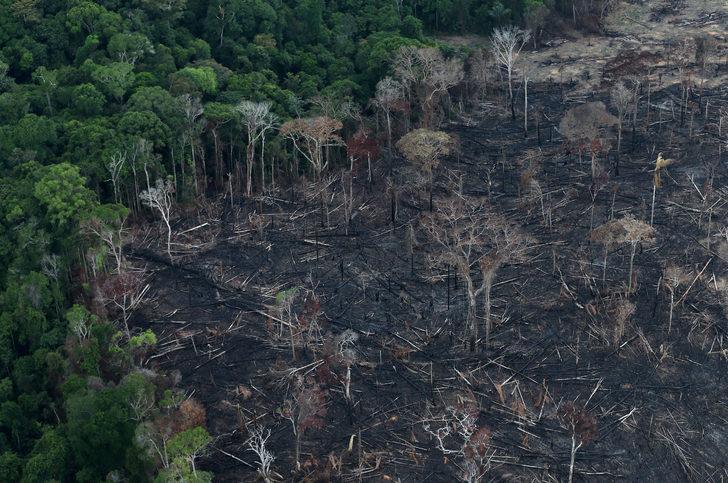 Amazon'daki ormansızlaşma bir yılda yüzde 25 arttı