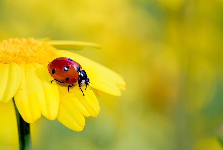 Rüyada böcek görmek ne demek, ne anlama gelir?