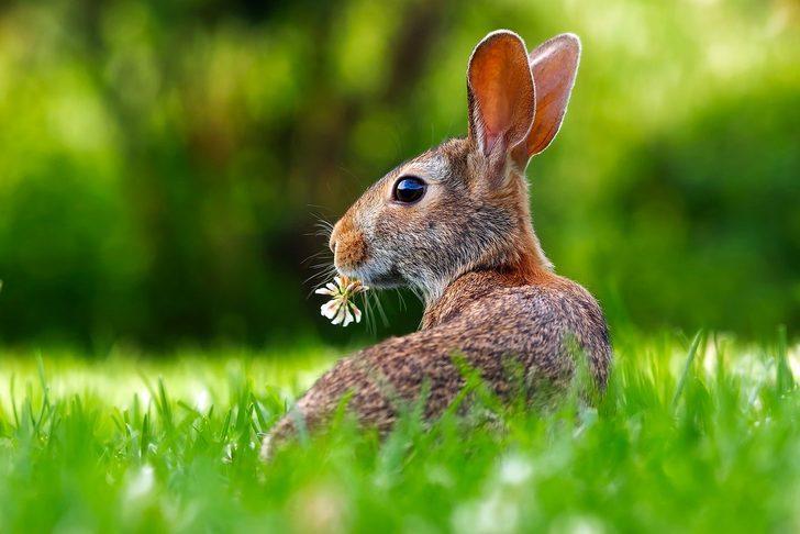 Kahve falında tavşan görmek