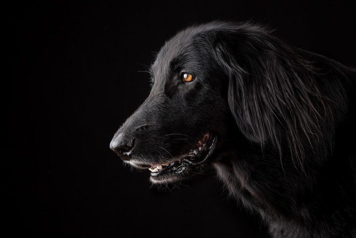 Kahve falında köpek görmek