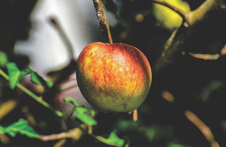Kahve falında elma görmek