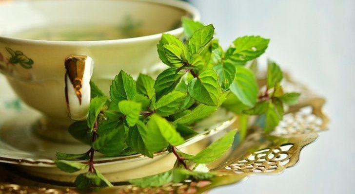 Burnu açıyor, enerji veriyor, baş ağrısına iyi geliyor! Bu bitkinin çayı sayesinde...