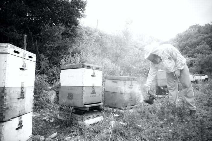 Faydaları saymakla bitmeyen arı sütünü herkes içemiyor! Eğer siz de o gruptaysanız...