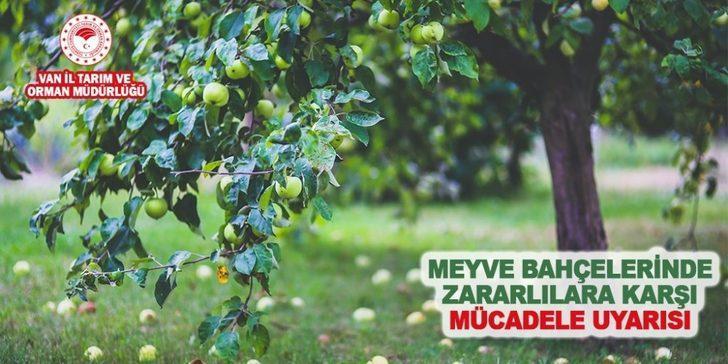 Müdür Görentaş'tan meyve bahçelerindeki zararlılara karşı uyarı