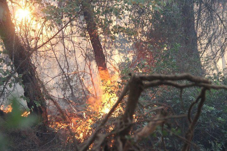 İzmir'de art arda çıkan yangınların ardından itfaiye personellerinin izinleri kaldırıldı
