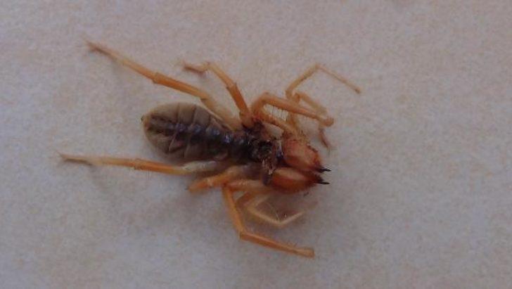 Evlerinde buldular! Et yiyen örümcek korkuttu