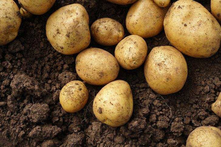 Patates: Faydaları nelerdir?