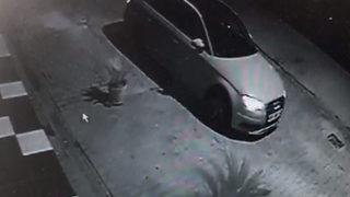 Lüks araçla gelip saksıdaki bitkiyi çaldılar