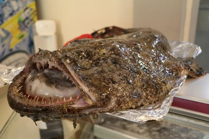 Akdeniz'de yaşayan fener balığı Karadeniz'de ağlara takıldı