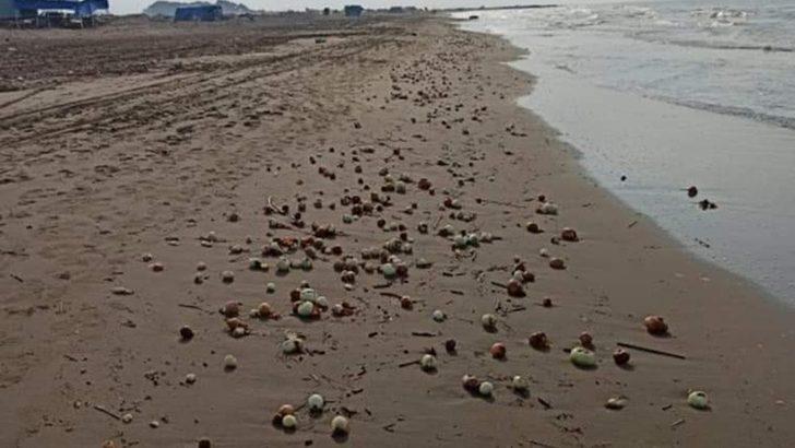 Adana'da dalgaların getirdiği yüzlerce kilo soğan plajı doldurdu