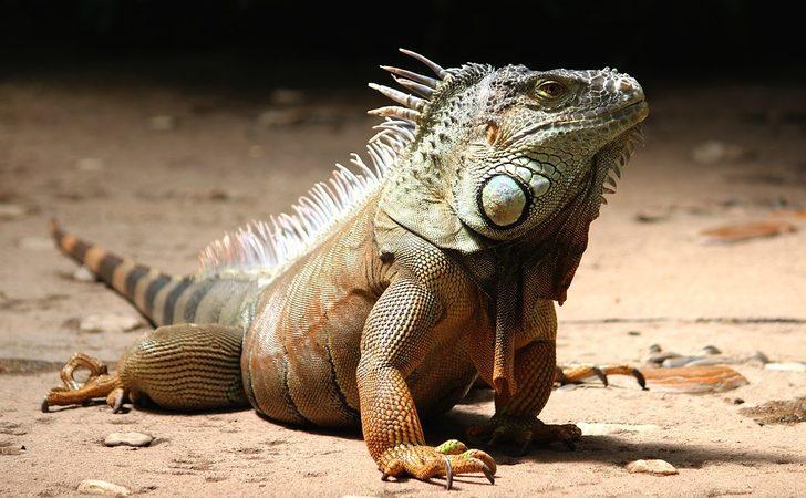 Çok şaşıracaksınız! İşte evde bakılan en egzotik hayvanlar...