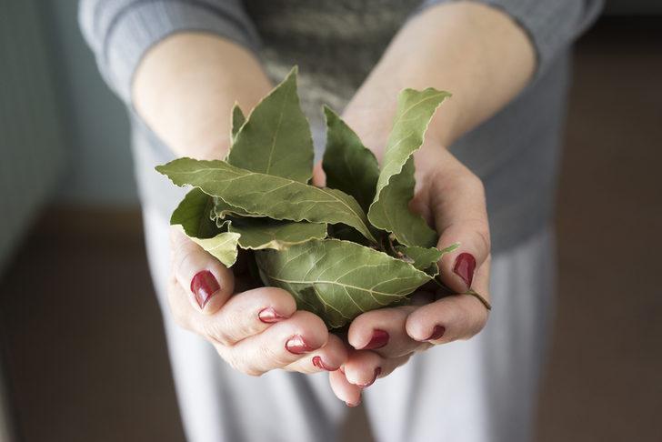 Defne yaprağı çayı: Faydaları nelerdir, nasıl hazırlanır?