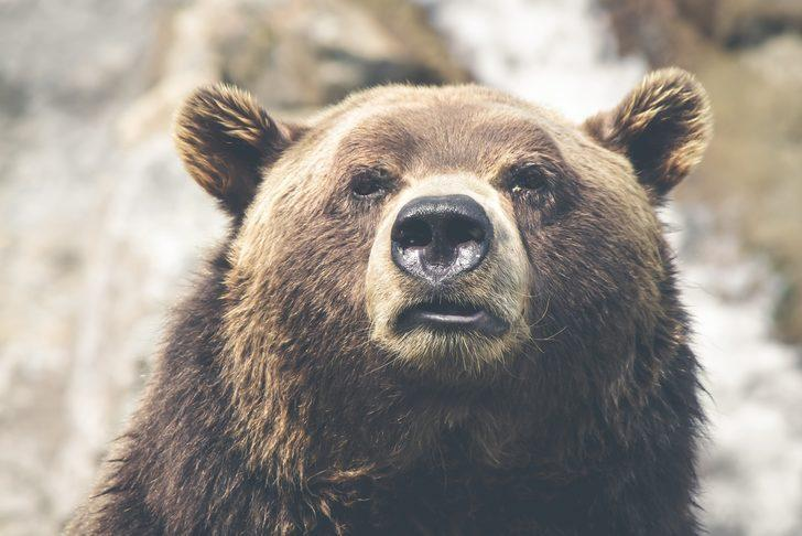 Rüyada ayı saldırısı görmek ne demek, ne anlama gelir?