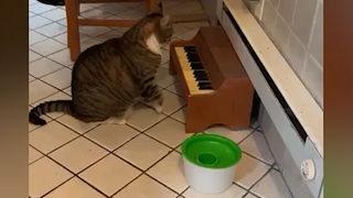Yok böyle kedi! Acıktığını haber vermek için...