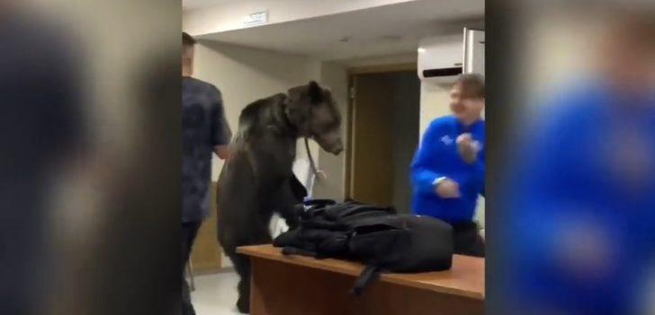 Rusya'da futbol takımının soyunma odasına ayı girdi! İşte o anlar