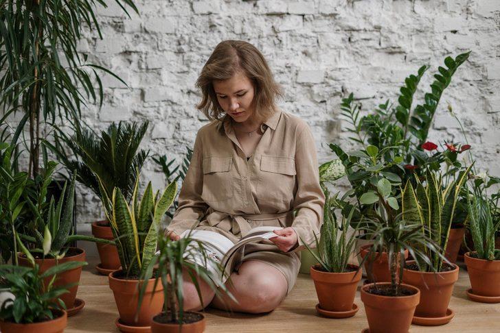 Evin havasını temizlemek için NASA ev bitkilerini öneriyor! İşte o bitkiler...