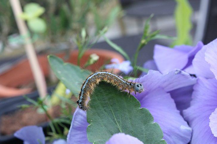 Rüyada kurtçuk görmek: Kurtçuk temizlemek, vücudunda kurtçuk