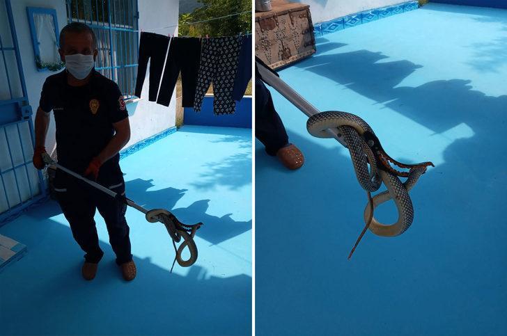 Eve giren 3 metrelik yılanı itfaiye çıkardı