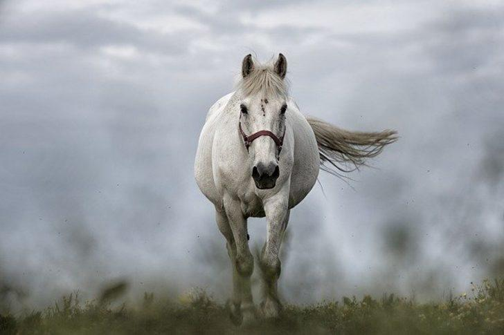 Rüyada at görmek: Atın koşması, beyaz at, siyah at