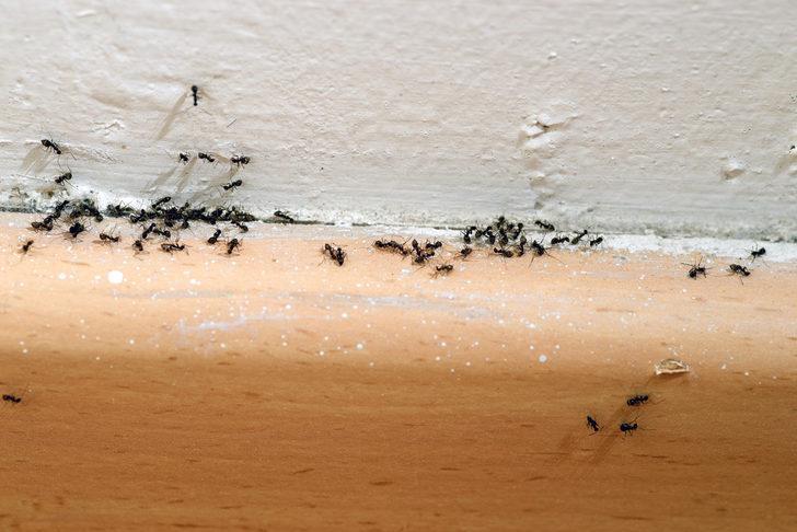 Rüyada Karınca Görmek: Vücudunda Karınca, Karınca Isırması