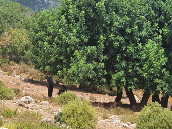 Korkunç olay! 'Dağlık alana gidiyorum' diye evden çıktı, ağaca asılı cesedi bulundu