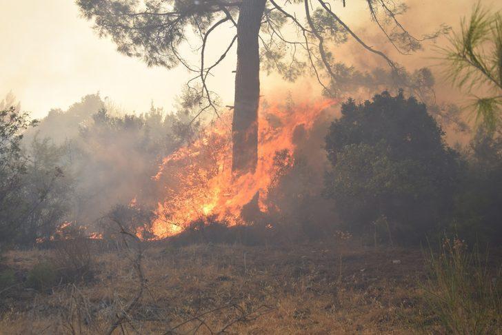 Adrasan'da 60 hektarlık ormanlık alan yangında zarar gördü