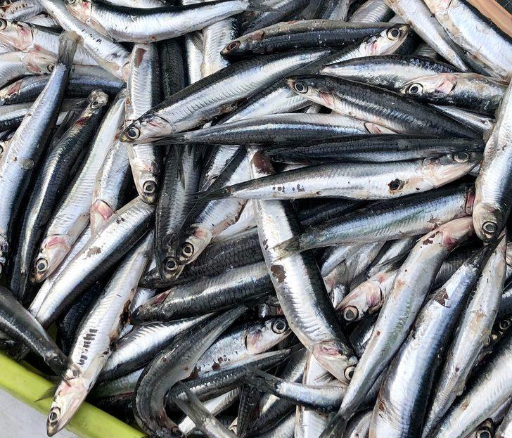 Lezzetli balık pişirmek istiyorsanız bu kurallara dikkat edin