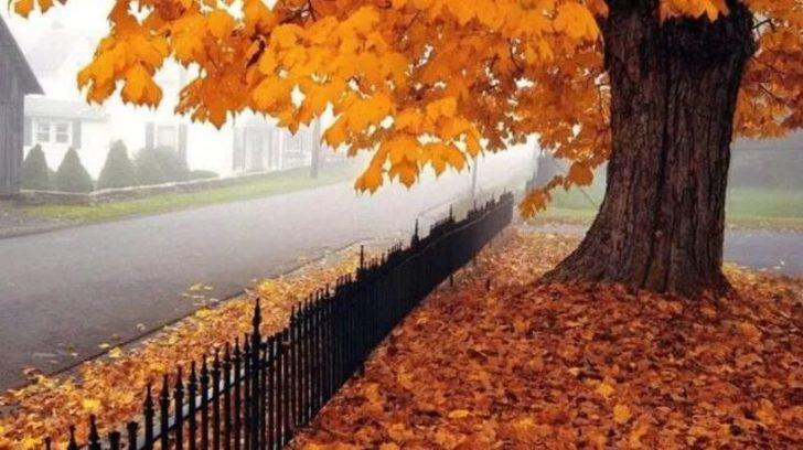 Şairlerin kaleminden en güzel sonbahar şiirleri...