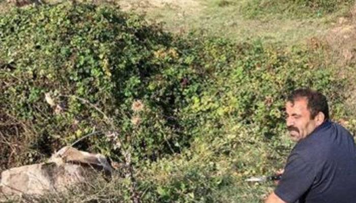 İstanbul'da  ineği 'sucuk' olmaktan itfaiye kurtardı thumbnail