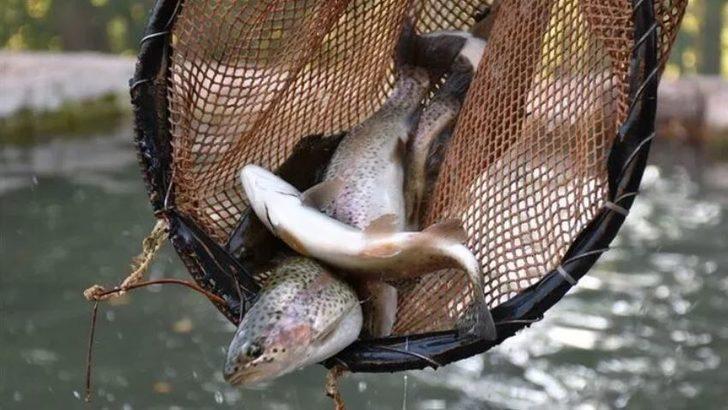Ekim ayında hangi balık yenir? Hangi balık hangi ayda yenir? Ekim ayı hangi balık mevsimi?