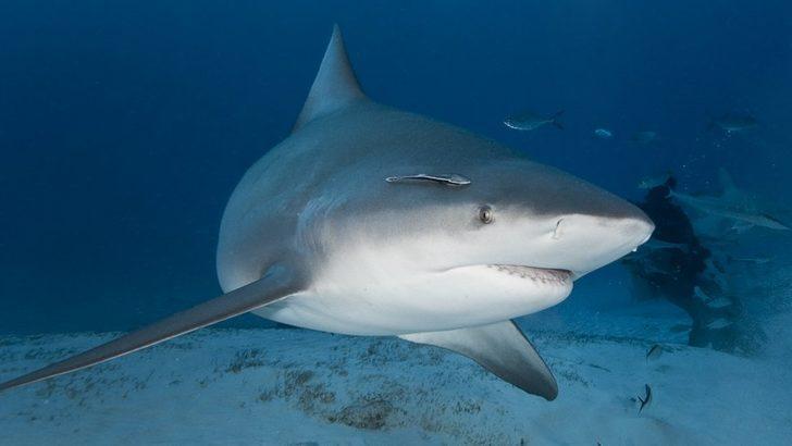 ABD'de hamile bir kadın eşini köpek balığı saldırısından kurtardı