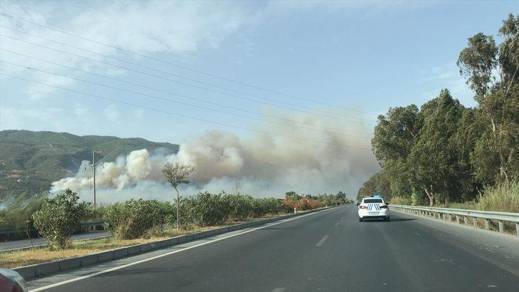 Aydın'da zeytinlik ve makilik alanda yangın çıktı